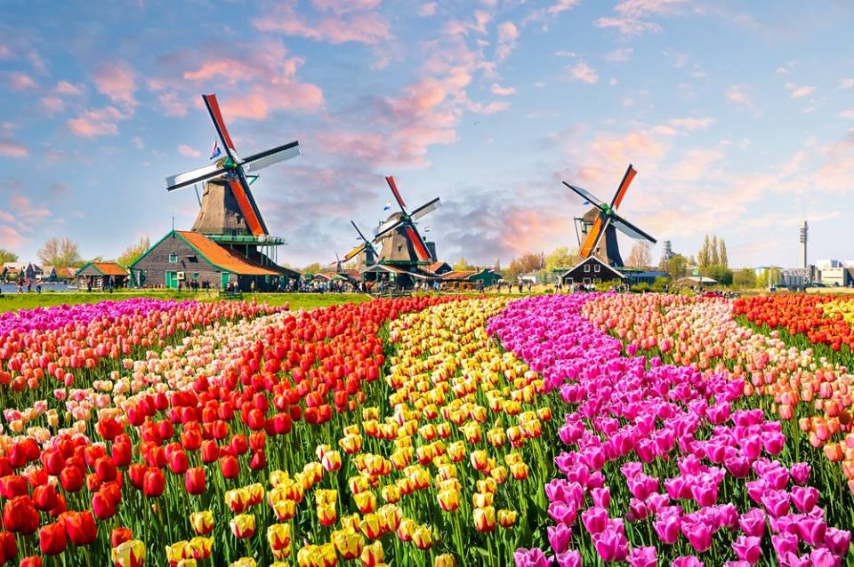 Image result for amsterdam lale